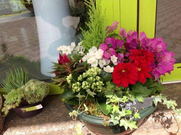 coupe de plantes variées de saison