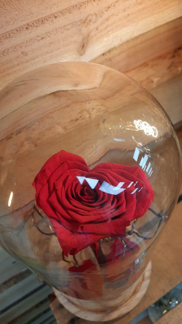 cloche avec rose eternelle